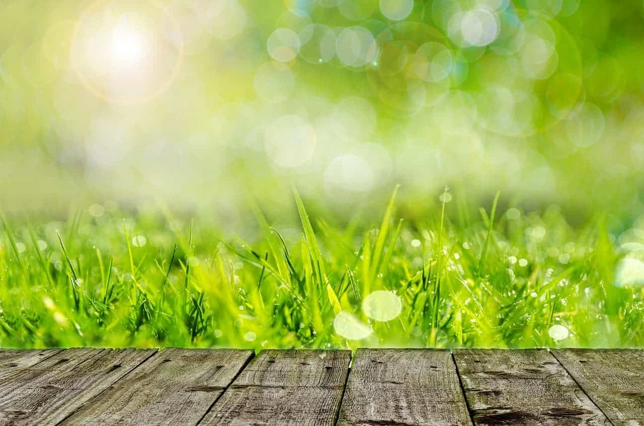 How often to aerate a lawn